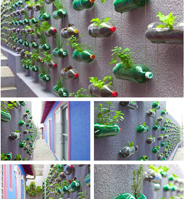 Create a beautiful bottle garden on your wall