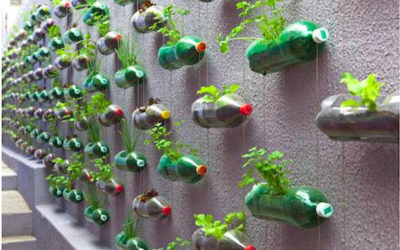 Top 5 Innovative Vertical Gardening Ideas
